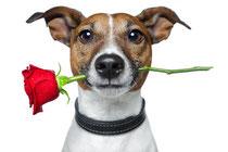Libido Hund