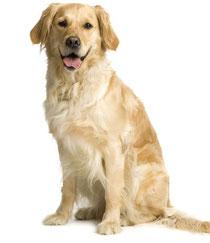 Haltung Hunde