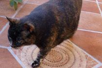 Katze Kiki zu vermitteln