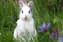 Kaninchen Rhonda sucht Mörchenspender