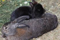 Kaninchen Lotte und Oskar