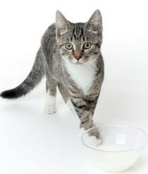 Katzen Haltung