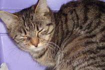 Katze Nanni abzugeben