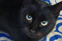 Tiervermittlung Katze Henriette