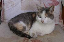 Katze Nina zu vermitteln