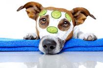 Hundefriseur Kaufering