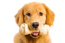 Zahnhygiene Hund