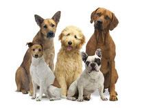Richtiges Verhalten im Umgang mit Hunden