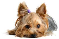 Chip Pflicht für Hunde ab 01.07.2011