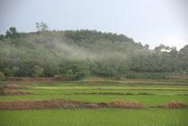 Paysages de rizières