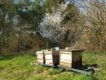Die Bienen freuen sich ...