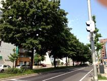 大通りの並木