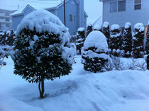 我が家の玄関前・・・