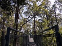 Der Tree Top Walk