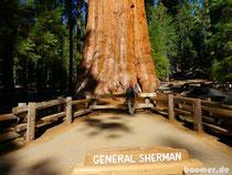 General Sherman - größter Baum der Welt