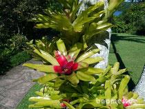 Pflanzen tummeln sich an den Stämmen der Palmen