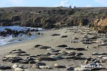 Keine Steine - sondern Seeelefanten