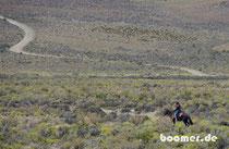 Gaucho in der Pampa