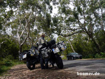 "Im Eukalyptuswald auf ""Koalajagd"""