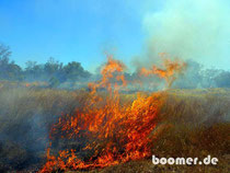 Bushfeuer am Stuart Highway
