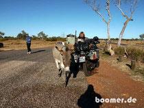 Wilder Esel auf dem Rastplatz
