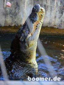 Jumping Croc
