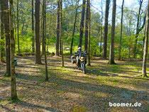 Ab in den Wald - Zelt aufschlagen