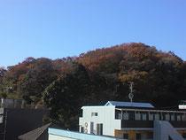 窓から生田緑地が望めます