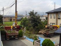 自社重機を使った植木の伐採・巨木の撤去