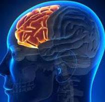 音と脳の関係