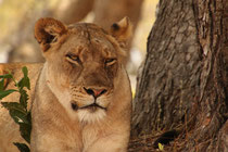 """""""Zambia-Expedition"""" - South Luangwa NP"""