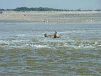 ballade nautique randonnée litoral eveils ecole de voile fort mahon plage baie de somme et baie d'authie