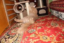 Кошки и кошачья мята