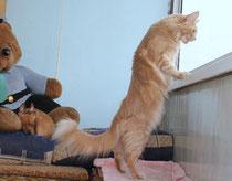 Кошки здоровье и уход.