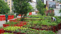 Urban Gardening in Berlin-Kreuzberg