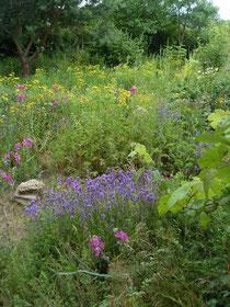 Essbare Wildpflanzen und Kräuter