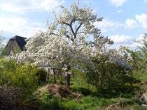 Permakultur in meinem Garten