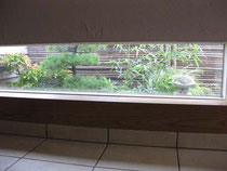 地窓 風水 ガーデニング
