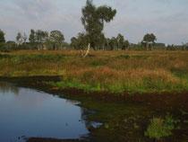 Hochmoorlandschaft