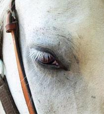 Equitation à proximité du Domaine de Beunes