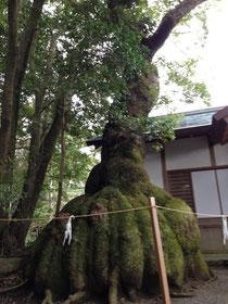 岐阜県 フラメンコ教室