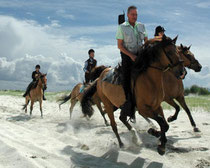 Balade à cheval Henson au domaine du Marquenterre