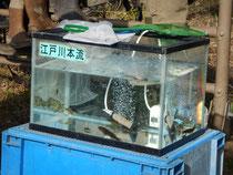 魚の種類が少ない水槽