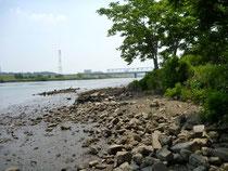 水位の下がった江戸川