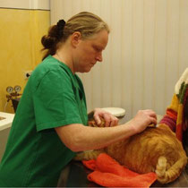 Behandlung einer Katze