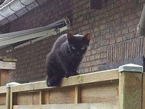 Katze Susi - kastriert