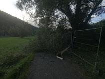 Der Tag nach dem Sturm
