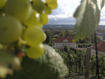 Weingut Schloss Wackerbarth in Radebeul