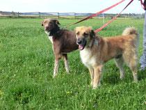 Tino (links) und Lassie (rechts)