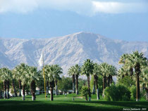 カリフォルニア 留学 アメリカ ゴルフ パーム